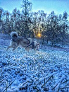 Ella's first winterwalk of 2016 - 1