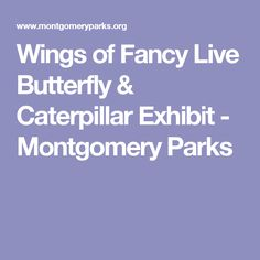 Wings of Fancy Live Butterfly & Caterpillar Exhibit - Montgomery Parks