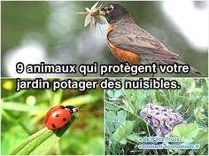Et oui, tous les animaux et insectes ne sont pas des nuisibles ! Voici 9 animaux qui protègent votre jardin des nuisibles sans que vous n'ayez d'efforts à fournir.  Découvrez l'astuce ici : http://www.comment-economiser.fr/9-animaux-qui-protegent-votre-jardin-potager-des-nuisibles.html?utm_content=bufferd635c&utm_medium=social&utm_source=pinterest.com&utm_campaign=buffer