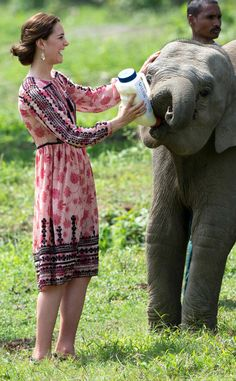 Fitted Floral from Kate Middleton's Best Looks  The Duchess of Cambridge was pretty in pink while feeding a baby elephant.