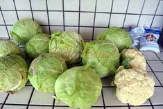 Cum se pune varza la murat Cata, Lettuce, Pune, Sprouts, Cabbage, Canning, Vegetables, Food, Nicu