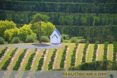 Vinhos da Nova Zelândia – Matakana Wine Trail  #Matakana #Auckland #Wineries #Wine #WineTrail