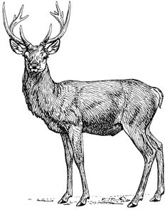 File:Stag (PSF).png