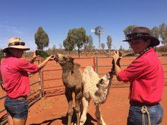Meet some of #Australia's most famous native animals. www.parkmyvan.com.au #ParkMyVan #Australia #Travel #RoadTrip #Backpacking #VanHire #CaravanHire
