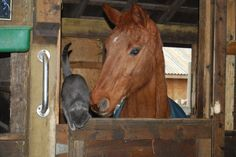 My senior horse Brook, and her kitty friend.