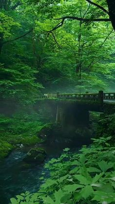 In the green forest of the bridge across the river