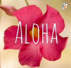 #LiveAloha #Alohafriday #workandtravelusa  llego para quedarse en un mes que vino a full, #abril trae muchos empleadores y nuevas propuestas !!!
