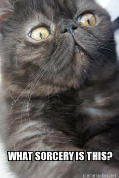 #holyshitcat #cat #cats #meme