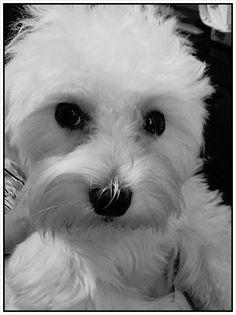 charming dog