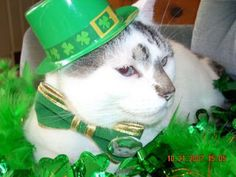 St Patty's Kitty all decked out in GREEN. #greencat