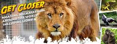 Get Closer to the animals at Newquay Zoo! #familyactivity #iloveNQY