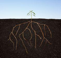 How to Start a Mentoring Program - Human Resources - mentor   Inc.com