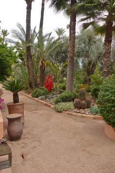 Gardens of La Mamounia hotel, Marrakech