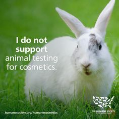 If you don't believe that any animal should suffer for the sake of lipstick, then please sign the petition using the to support the Humane Cosmetics Act 🚫💉🐇 Stop Animal Testing, Stop Animal Cruelty, Animal Shelter, Animal Rescue, Vegan Humor, Humane Society, Vegan Animals, Cruelty Free Makeup, Save Animals