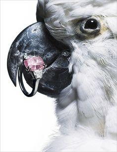 Laziz Hamani / Harry Winston - Animals - 2007