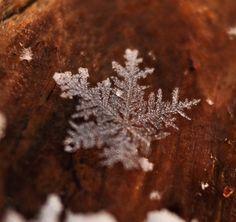 Snowflake on Wood