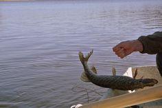 Fishing in Kyrksjön