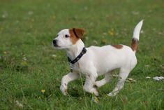 12 Mejores Imágenes De Razas De Perros Pequeños De Pelo