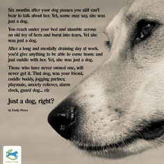 Those who don't know, have never opened their heart to welcome a dog, any pet in. Never will a dog be 'just a dog.' The purest of souls ❤