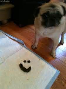 smile poop