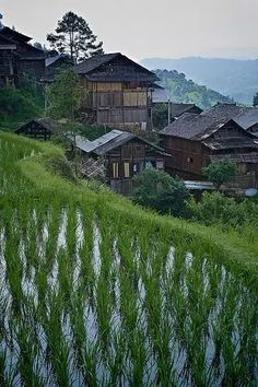 誰最中國 Rice fields in a dong village, Guizhou, China mood