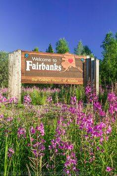 13f24d11a3b Fireweed and welcome to Fairbanks sign