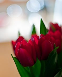 Tulips in AlmostSpringTime   Flickr - Photo Sharing!