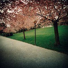 Lausanne, Sidewalk, Explore, Photography, Photograph, Side Walkway, Fotografie, Walkway, Photoshoot