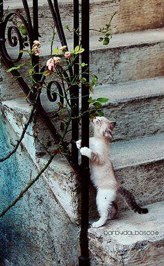 Lovely Cat- by Barby Dalbosco www.500px.com/photo/47956044