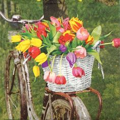 4 Single Lunch Party Paper Napkins for Decoupage Decopatch Craft Tulip Basket
