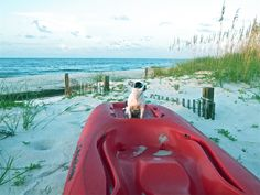 Ethel on the kayak. Sunrise Point - St. George Island, FL -Dog friendly people friendly, family place.  Where else would we want to be? The Forgotten Coast