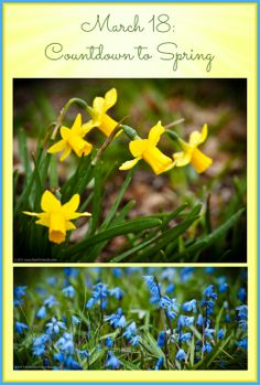 PHOTO OF THE DAY. March 18: Countdown to Spring . . . Just Two More Days! Thanks to Virgil Sweeden for these lovely shots from our back yard! See lots of our photos and find out all about us at www.PawPrintsLife.com.