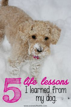 Five important life lessons that my dog understands better than I do. #overstuffedlife #ad #IamsCG