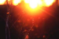 Sunset by Kaylin Raycraft on 500px