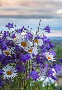 Daisies, simple and sweet. Daisies are the way to win my heart. Flowers Nature, Fresh Flowers, Purple Flowers, Spring Flowers, Wild Flowers, Beautiful Flowers, Bouquet Champetre, Daisy Love, Ikebana