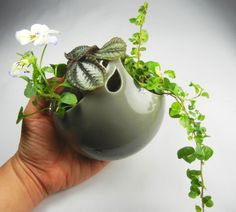wall bubble planter with pansy and ivy