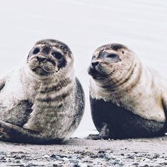 """134 Synes godt om, 13 kommentarer – ✨matilda✨ (@matildaellen_) på Instagram: """"i gott säl-skap #måkläppen #sälsafari #sealspotting"""""""