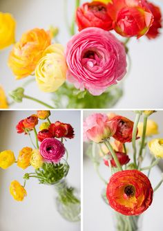 Ranunculus - I've always LOVED these flowers and never knew what they were called. so happy right now haha