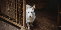 Russia, Prosecutor, Ensure the investigation of all cases of cruelty to animals!