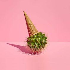 Nuestro Catu's Day de hoy nos lo trae Paloma Rincón, fotógrafa y diseñadora gráfica que siempre nos sorprende con su desbordante creatividad, reinventando los objetos cotidianos para crear escenas irreales llenas de magia y color.cact