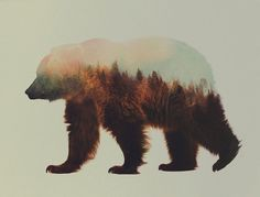 https://mrmondialisation.org/les-photographies-animales-superposees-de-andreas-lies/