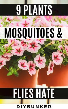 These mosquito repelling plants are great for landscaping your front and backyard. Garden Yard Ideas, Lawn And Garden, Garden Projects, Full Sun Garden, Full Sun Plants, Garden Bugs, Garden Layouts, Low Light Plants, Garden Water