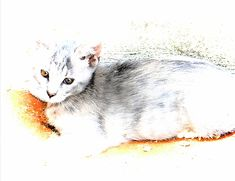Kitten Tranquility Canvas Print / Canvas Art By Dorothy Berry-lound