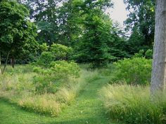"""Deborah Nevins garden native grasses ; Gardenista.  Beyond the fence, a mown path leads through native trees, tall grasses, and clumps of fragrant bayberry. The contrast with the rough native planting reminds you how close you are to the beach. """"That's what I tried to do,"""" Nevins says. """"Use the formal to contrast with the natural, which is all around me and which I didn't touch."""""""