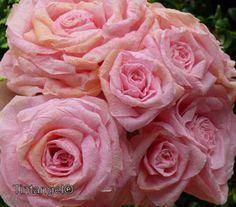 Boeketje rozen weblog. Duidelijke uitleg