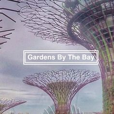 Gardens By The Bay is in Singapore, Singapore. Gardens by the Bay right behind the Marina Bay Sands -the famous hotel with an infinity pool on the top. Gardens By The Bay, Singapore, Explore, Park, Modern, Nature, Parks, The Great Outdoors, Mother Nature