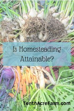 Have you set yourself up for homesteading failure? Here's how to make homesteading attainable for busy people on a budget.