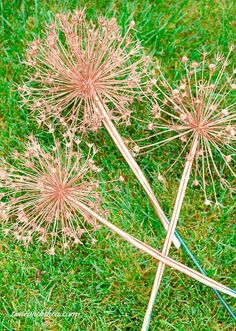 How To Create Gorgeous Metallic Painted Dried Giant Allium Flowers