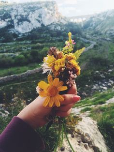 "peacefulgemini: ""spazju: "" my friends collected flowers and i took pictures of them! 💐🌸🌷🌹🌻🌺🌼 ig: "" Mostly nature "" Wild Flowers, Beautiful Flowers, Giving Flowers, Goals Tumblr, Flower Aesthetic, Nature Aesthetic, Adventure Is Out There, Planting Flowers, Succulents"