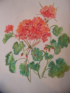 Red Geranium Colored Pencil Drawing